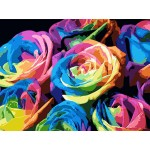 Splendid Colorful Roses