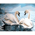 A Pair of Swans Romantic Signs Of Love