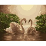 Pair of Swan In Evening