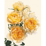 Beautiful Vivid Yellow Roses