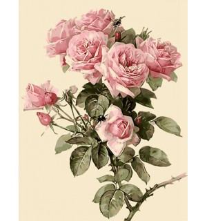 A Beautiful Pink Rose Bunch Needlepoint Canvas