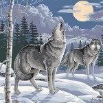 A Pair of Wolves In The Evening