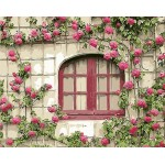 Pink Roses On Wall