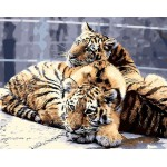 A Pair of Little Cute Tiger Cubs