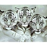 Portrait Of 3 White Tiger Babies