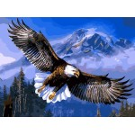 A Preying Bold Eagle In The Valley