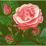 Pink Rose With Buds Needlepoint Pillow Kits