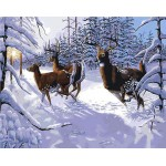 Deer In Snow Forest
